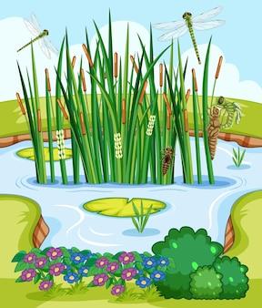 Escena de la naturaleza con estanque y libélulas.