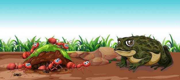 Escena de la naturaleza con sapo y hormigas
