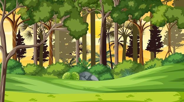 Escena del paisaje forestal al atardecer con muchos árboles diferentes