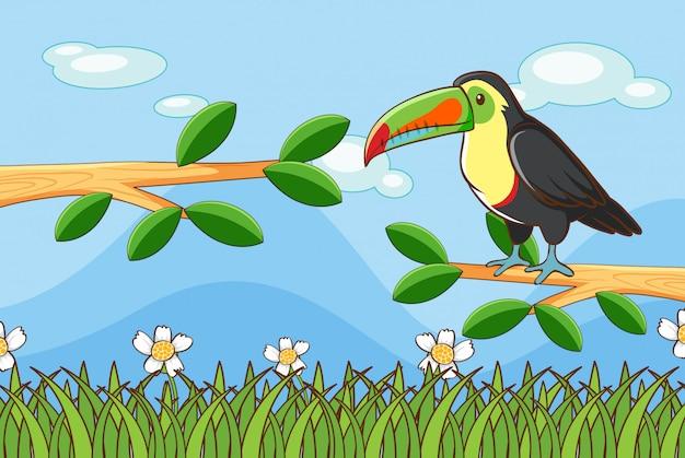 Escena con pájaro tucán en rama
