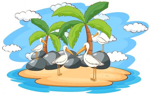 Escena con pájaros pelícanos en la isla