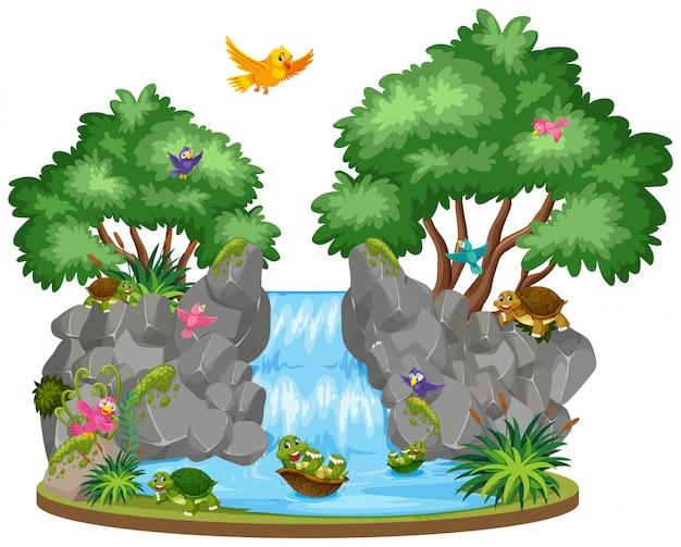 Escena de pájaros y tortugas en la cascada