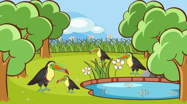 Escena con pájaros tucanes en el parque