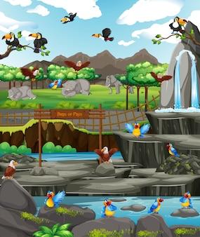 Escena con pájaros en el zoológico