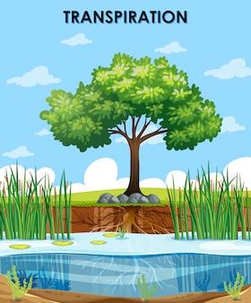 Escena que describe la transpiración de las plantas.