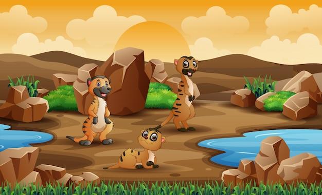 Escena con suricatas en la ilustración de campo