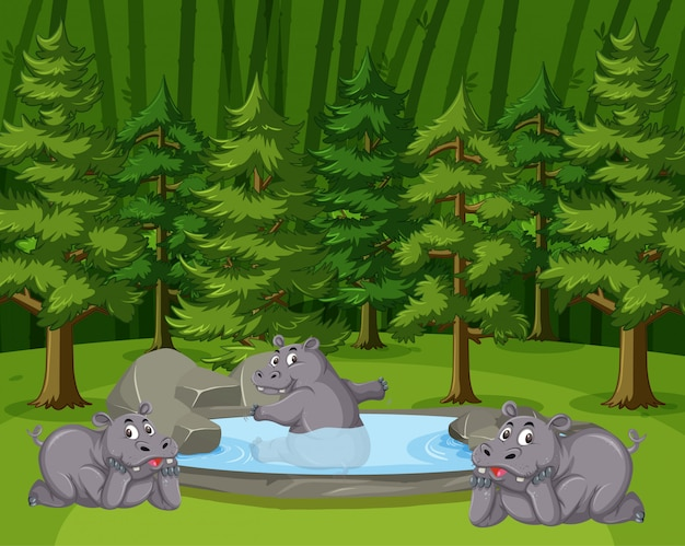 Escena con tres hipopótamos relajantes en el estanque