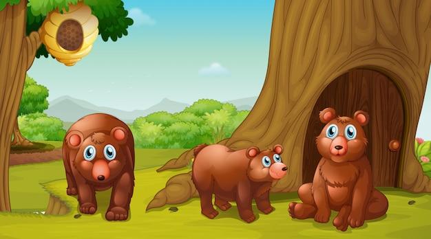 Escena con tres osos en el parque.