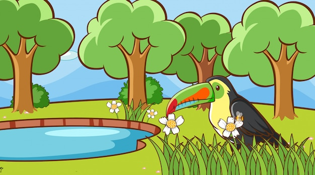 Escena con tucán pájaro en el parque