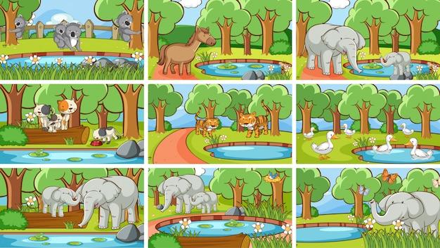 Escenas de fondo de animales salvajes