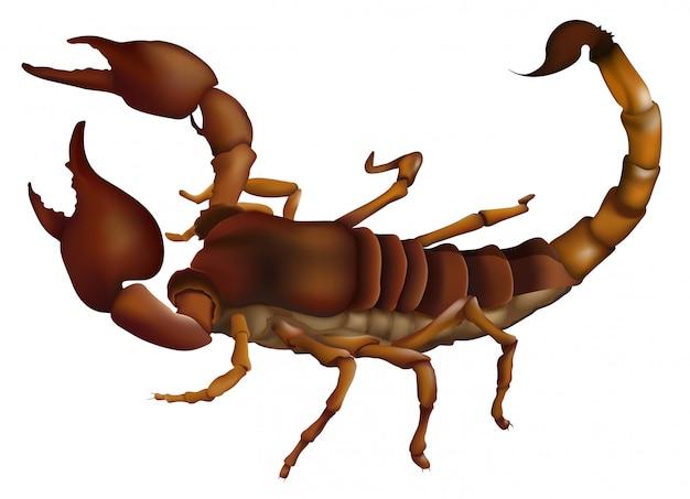 Un escorpión