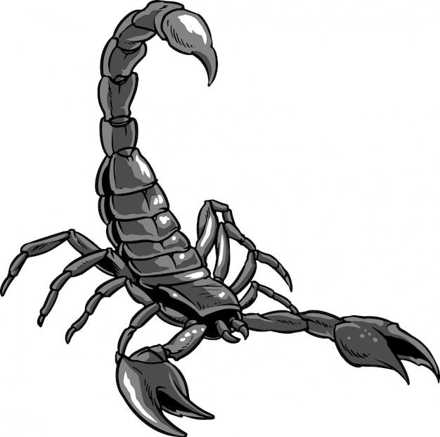 Mano Dibujada Escorpión Aislado Sobre Fondo Blanco Descargar