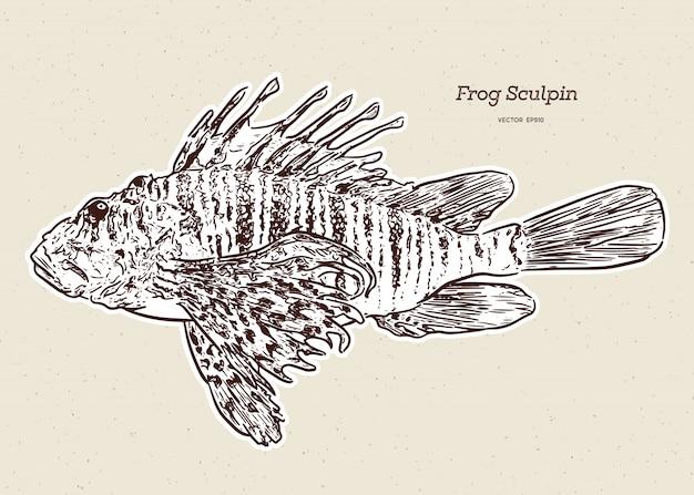 La escultura de steller (myoxocephalus stelleri), también conocida como escultura de rana, dibujo a mano.