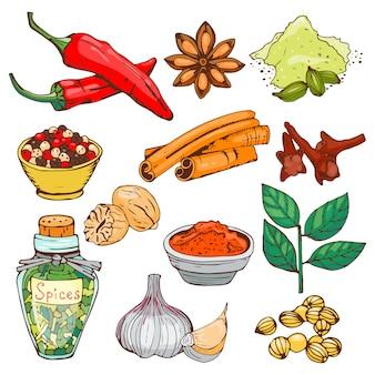 Especias condimento estilo dibujado a mano alimentos hierbas elementos y semillas ingrediente cocina brotes de flores hojas plantas alimenticias vegetales orgánicos saludables.