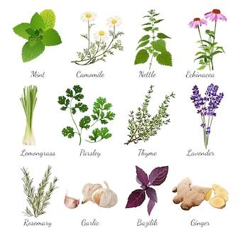 Especias y flores de pradera conjunto de hierbas