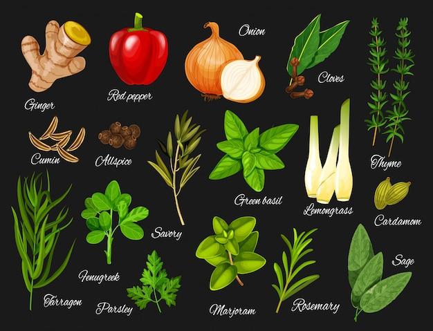 Especias y hierbas verdes. condimentos de alimentos naturales