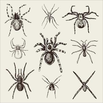 Especies de arañas o arácnidos, los insectos más peligrosos del mundo, vintage antiguo para el diseño de halloween o fobia. dibujado a mano, grabado puede usar para tatuaje, telaraña y viuda negra venenosa, tarántula, birdeater