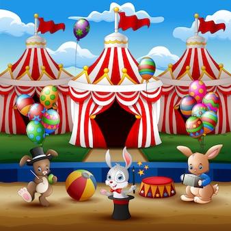Espectáculo animal de circo y actuación de acróbata en la arena.