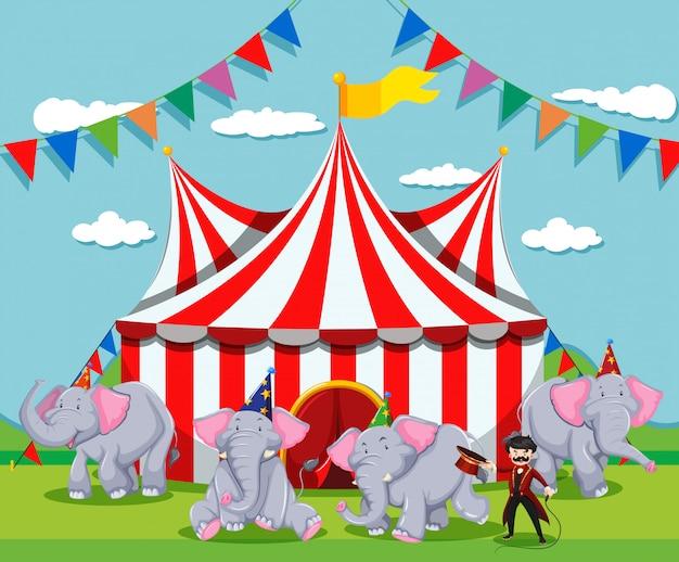 Espectáculo de elefantes en el circo.