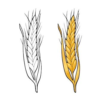 Espiga de trigo aislado sobre fondo blanco ilustración monocromática y color de la vendimia del vector