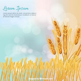 Espigas de trigo fondo