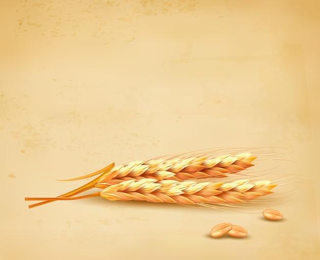 Espigas de trigo. ilustración.