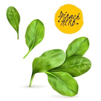 La espinaca fresca del bebé deja una imagen vegetal popular realista que promueve alimentos saludables, hierbas cocidas y crudas
