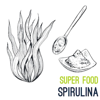Espirulina súper comida dibujada a mano