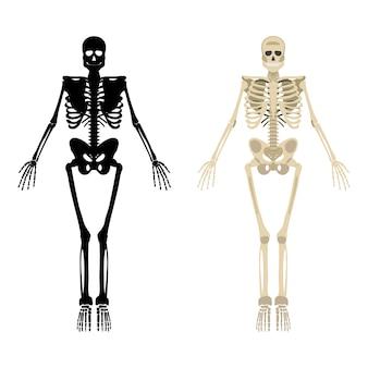 Esqueleto humano frontal silueta.