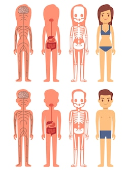 Esqueleto masculino y femenino