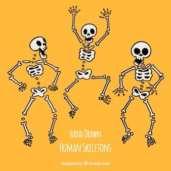Esqueletos humanos divertidos dibujados a mano