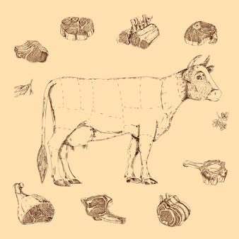 Esquema dibujado a mano de carne de carne de res con letras de vaca y hierbas en beige