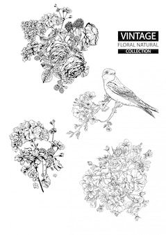 Esquema floral para colorear colecciones vintage