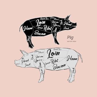 Esquema y guía de cerdo