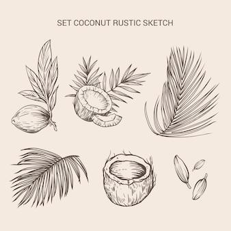 Establecer boceto rústico de elemento de coco