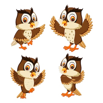 Establecer colección de dibujos animados de pájaro búho