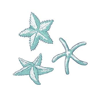 Establecer estrellas de mar. esquema monocromático de estrella de mar de tres tipos dibujo ilustración de logotipos de tarjetas turísticas sobre tema marino.