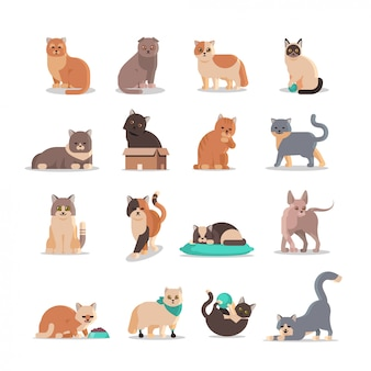 Establecer gatos lindos en diferentes poses mullidas adorables animales de dibujos animados gatito doméstico hogar mascotas concepto plano de cuerpo entero