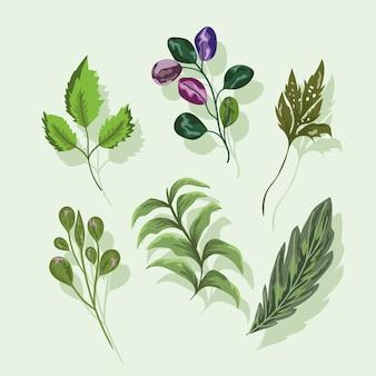 Establecer iconos hojas rama follaje naturaleza botánica