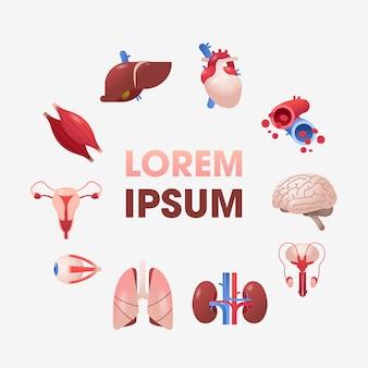 Establecer órganos internos humanos anatómico estómago hígado riñones pulmones corazón cerebro riñones ojo músculos iconos colección anatomía cuidado de la salud concepto médico copia espacio