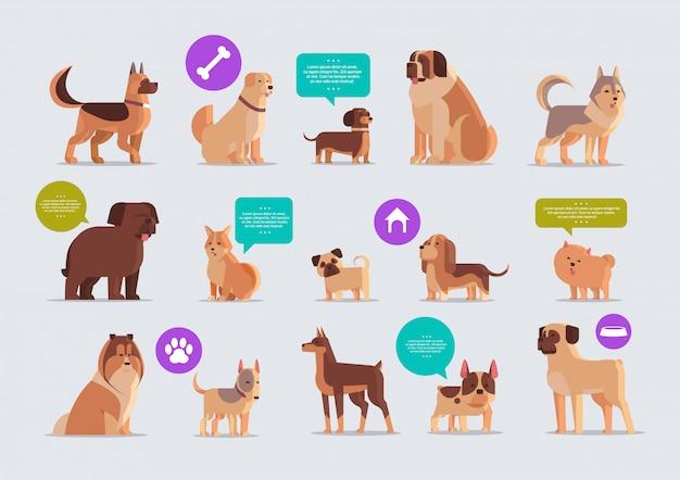 Establecer perros de raza pura peludos amigos humanos hogar mascotas colección concepto animales de dibujos animados horizontal