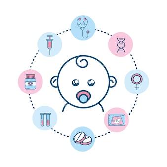 Establecer el proceso de fertilización del embarazo para la reproducción de la biología