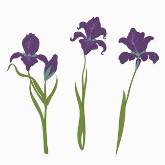 Establecer tres iris aislados sobre fondo blanco, estilo plano moderno de una ilustración, floral