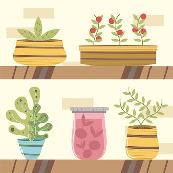 Estante del jardín de la casa con plantas en macetas suculentas e ilustración de plantas de tomates