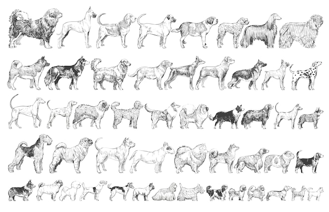 Estilo de dibujo de ilustración de la colección de razas de perros