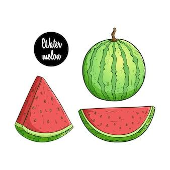 Estilo dibujado a mano de color de la fruta de la sandía con dos tipos de rebanada sobre fondo blanco
