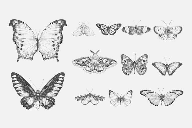 Estilo de dibujo de la ilustración de la colección de mariposas