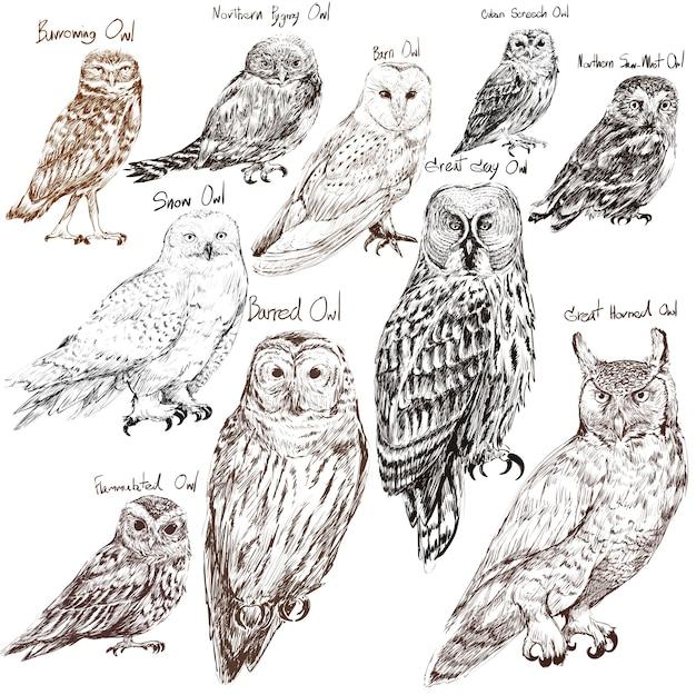 Estilo de dibujo de la ilustración de la colección de pájaros búho