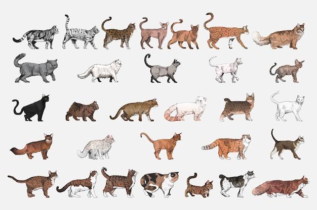Estilo de dibujo de ilustración de la colección de razas de gatos.