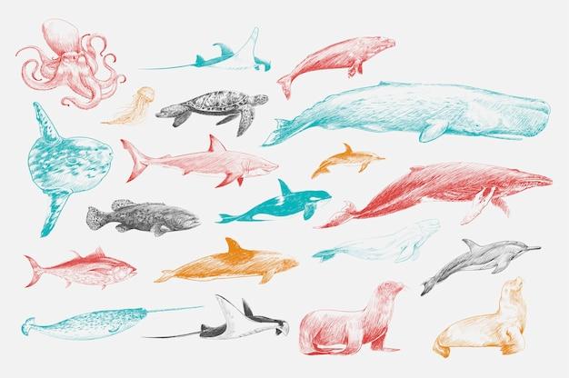Estilo de dibujo de ilustración de la colección de vida marina